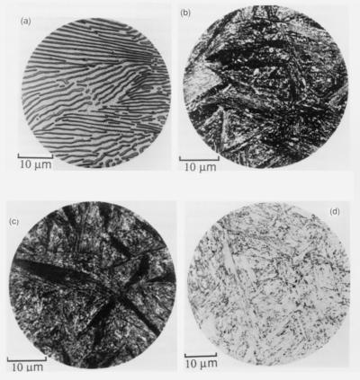 Microstructures in a eutectoid steel